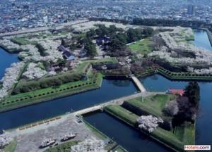 Sakura 1_Hakodate