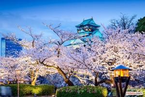 Sakura 2_Osaka