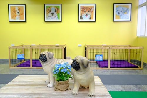 """รพส.ทองหล่อ เปิดบริการ """"Senior care center""""  ตอบโจทย์เจ้าของสุนัขสูงวัย"""