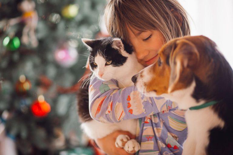 อาหารน้องหมา-น้องแมวตามช่วงวัย ความใส่ใจของเจ้าของ สู่ความสุขภาพดีของสัตว์เลี้ยง